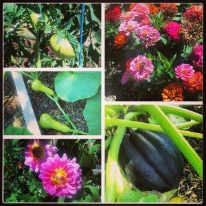 gardenwonders